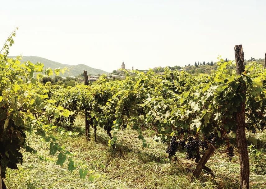 Weinberge in Georgien, Weinanbau